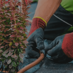 Person's gloved hands fastening a hose to wrap around a plant.